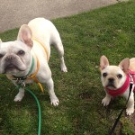 photo - Walking Dogs on the grass