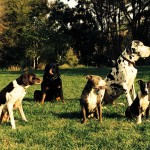 photo - group of dogs playing on walk